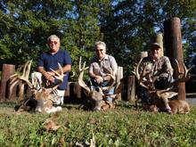 3 big whitetail bucks